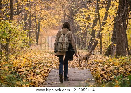 Girl and dog on walk in beautiful autumn nature park. Young female person and her pet staffordshire terrier take a walk in the forest and enjoy beautiful october nature and yellow tree leaves