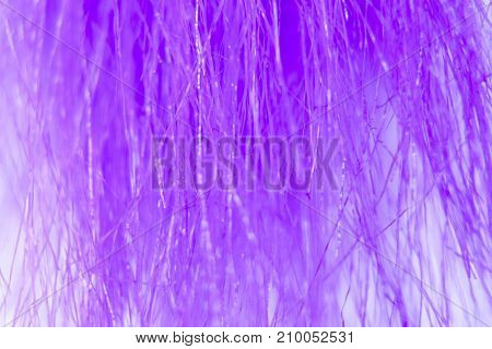 Texture Of Thin Purple Hair Or Fur Strands