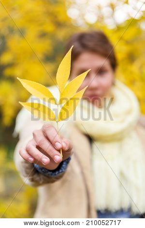 Attractive brunette with short haircut in autumn forest holds a yellow leaf. Leaf close-up, the girl is blurred.