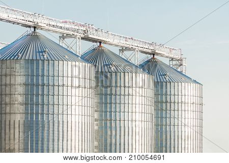 Modern Agricultural Silos Or Grain Elevator With Blue Sky On The Background. Storage Of Grain And Ot