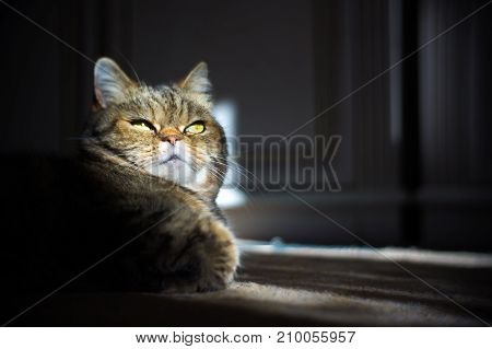 tabby cat funny face portraite beautiful background