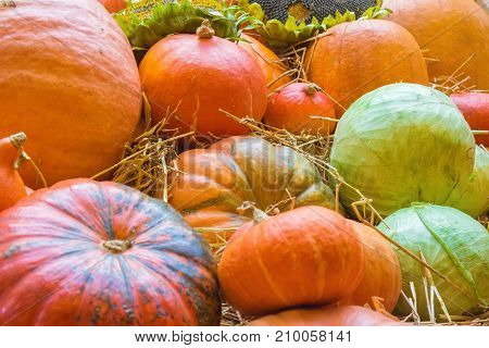Pumpkins, autumnal harvest and cabbage on the hay. Autumn background