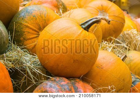 Orange pumpkin close-up. Agricultural products on the hay. Autumn harvest on a market