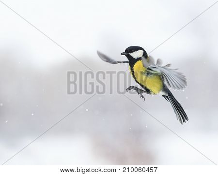 cute bird flying with its wings outstretched widely among snowfall