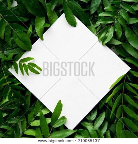 White paper placed on the green leaves with space for text.