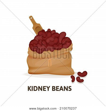 Concept of grain crops in bags. Bag of red kidney beans culture and wooden spoon, plant, an agricultural crop, useful natural organic food, dishes, jute sack with red beans. Vector illustration.