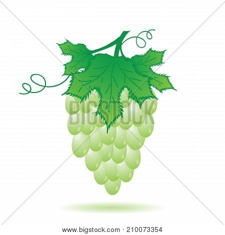 green grapes with leaves isolated on white background