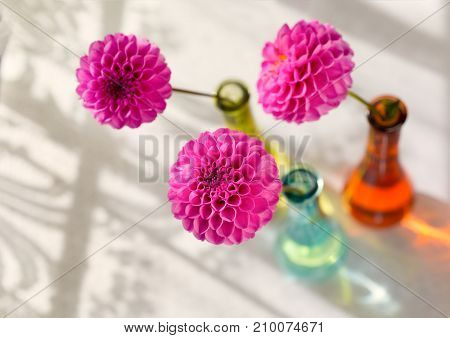 Pink pompom dahlias in colorful glass vases beside a lace curtained window.