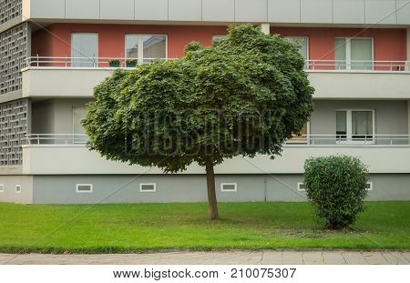 Lawn and tree in front of a high rise in the city