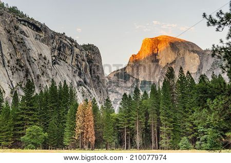 The setting sun illuminates parts of Half Dome with bright golden colors. This particular sunset was shot from the floor of Yosemite Valley, in Yosemite National Park