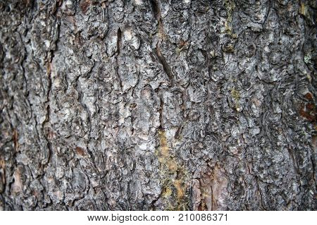 Background of natural wood surface. Wooden texture
