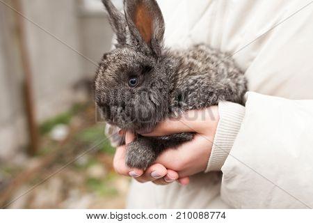Easter Bunny In Girls Hands