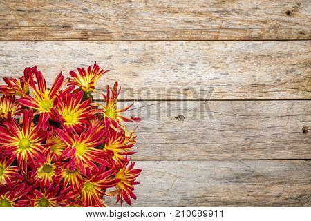 rustic barn wood background with a bouquet of fall mums and copy space