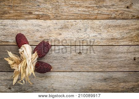 rustic barn wood background with ears of decorative strawberry corn and copy space