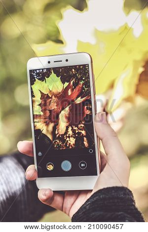 Girl using her smartphone. Young successful woman takes a picture of golden leaves on a mobile phone.