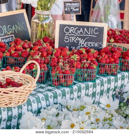 Cute, Charming Strawberries and Daisies at a Stall in a Spring and Summertime California Farmer's Market