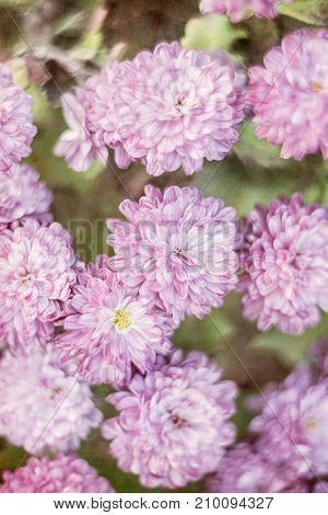 Purple Flowers Background with filters applied Vintage Look and Soft Focus