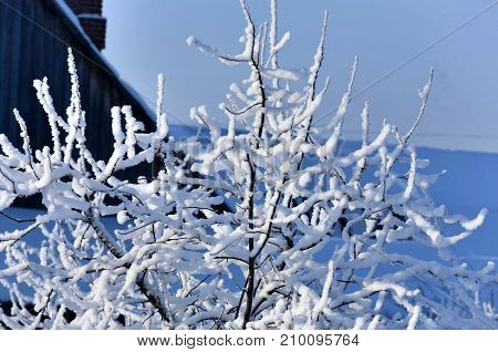Garden Trees Covered With Fluffy White Snow
