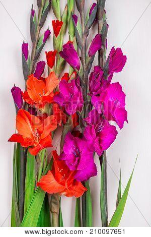 Bunch Of Beautiful Gladiolus Flowers