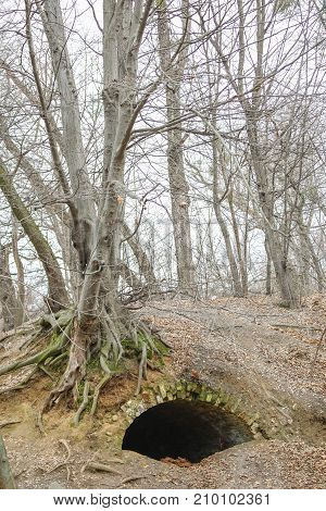 Old Tree With Long Naked Roots With Big Hole Underneath , An Entrance To Dungeon In A Forest Or A Pa