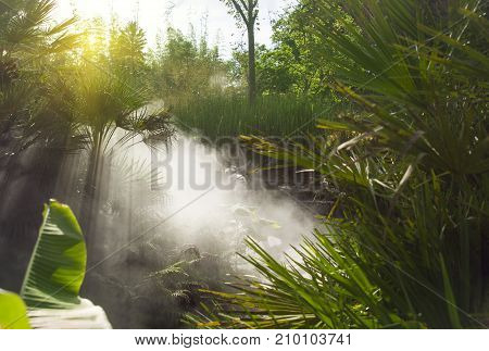Foggy morning in the jungle with the rays of the sun