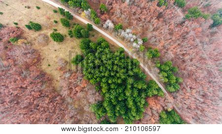 Aerial view of road through forest. Autumn colors engulfing the nature.