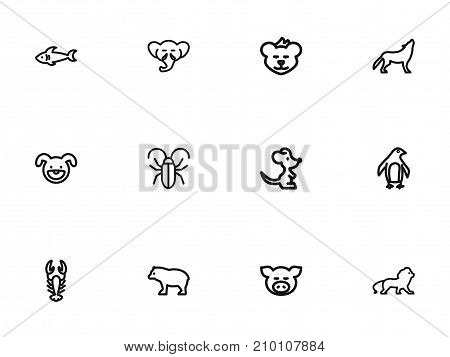 Set Of 12 Editable Zoo Outline Icons. Includes Symbols Such As Cougar, Wildcat, Wolf And More