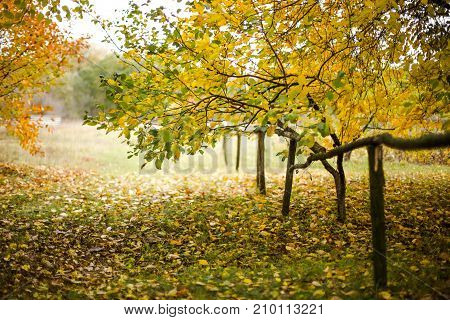Autumn in the village. Wooden fence on a background of yellow trees. Fence from the beamsAutumn background.