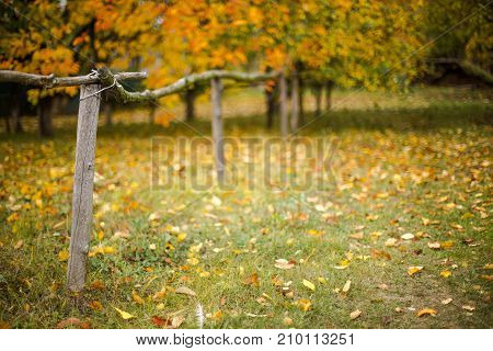 Autumn in the village. Wooden fence on a background of yellow trees. Autumn background.
