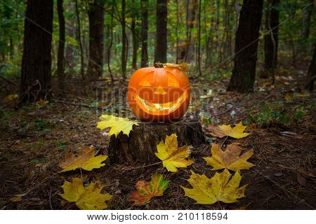 Halloween pumpkin glowing in the dark forest