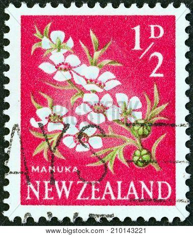 NEW ZEALAND - CIRCA 1960: A stamp printed in New Zealand shows Manuka (Tea Tree)  flowers, circa 1960.