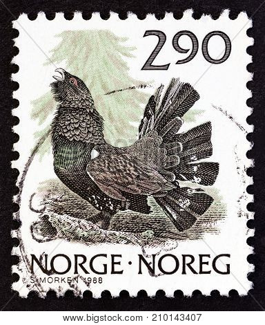 NORWAY - CIRCA 1988: A stamp printed in Norway shows Western Capercaillie (Tetrao urogallus), circa 1988.