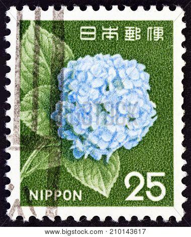 JAPAN - CIRCA 1966: A stamp printed in Japan shows Hydrangea flower, circa 1966.