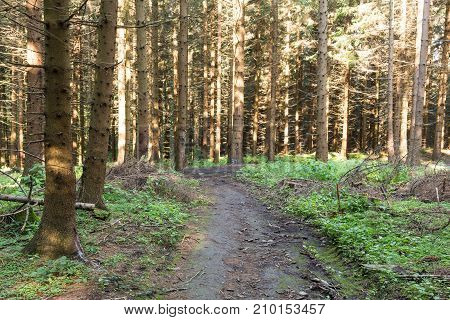 Narrow Path Lit By Soft Spring Sunlight. Forest Spring Nature. Spring Forest Natural Landscape With