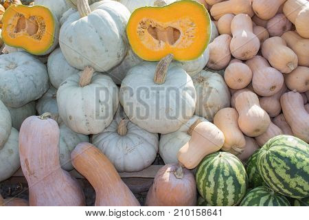 Pre-holiday colorful pumpkins and watermelons display at farmers market. pumpkin and watermelon harvest in autumn season