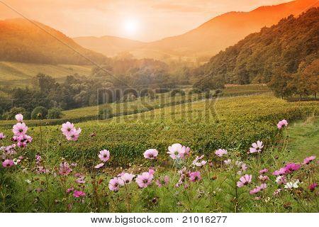 Sunset over vineyard valley