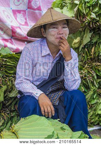 SHAN STATE MYANMAR - SEP 06 : Burmese woman selling betel leaf in a market in Shan state Myanmar on September 06 2017 in Myanmar people chewing the leaf with areca nut.