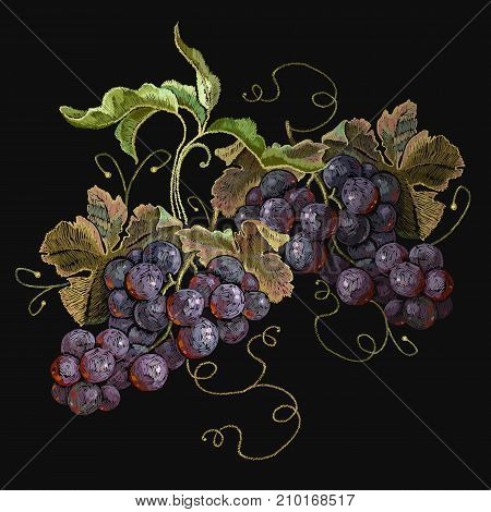 Embroidery cluster of grapes beautiful still life. Template fashionable clothes t-shirt design print renaissance style. Classical embroidery grapes on black background
