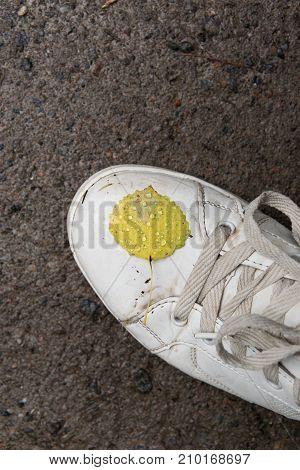 Yellow autumn  leaf on white shoe, autumn season.
