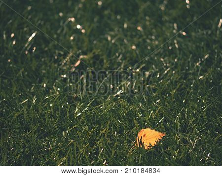Soccer Green. End Of Football Season. Dry Leaves   Fallen On Ground Of Plastic Football Turf.