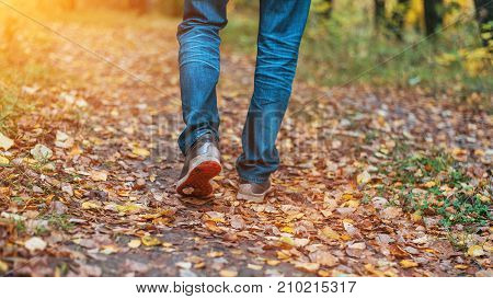 A man is walking along a path in the forest. A man stops walking. The girl's girlfriend's. Hot girls on the nature in the park among the leaves of yellow. Autumn park in bright colors