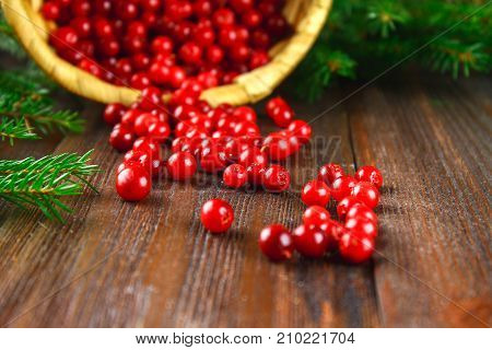 Cowberry, Foxberry, Cranberry, Lingonberry Sips From The Basket On A Brown Wooden Table. Surrounded
