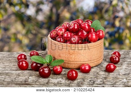 Cranberry with leaf in wooden bowl on old wooden table with a blurry garden background.