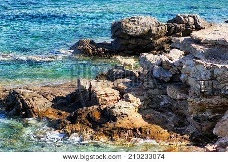 Lonely sheep at rocky seashore at Creta island Greece poster