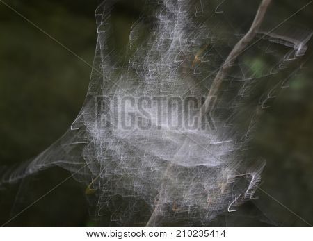 hoarfrost on a spider web southern Bohemia Czech Republic