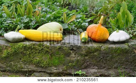 view of autumn vegetables southern Bohemia Czech Republic