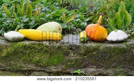 view of autumn vegetables southern Bohemia Czech Republic