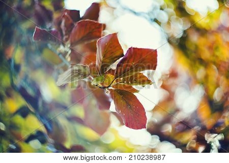 Colorful Autumn leaves on the park tree