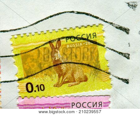 GOMEL, BELARUS, 13 OCTOBER 2017, Stamp printed in Russia shows image of the Hare, circa 2008.