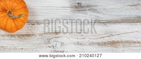 Autumn pumpkin in flay lay view on rustic white wood with ample copy space